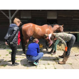 Day 1, barefoot trimming workshop `theory` to get more insight in healthy hooves and healthy feeding ( 06-02-2021 )