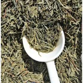 Green Tea Sencha
