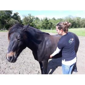 Health check horse