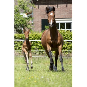 HERB MIX & SUPPLEMENTS FOR PREGNANT MARES AND YOUNG HORSES
