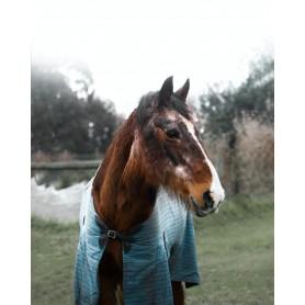 SUPPLEMENTS FOR SENIOR HORSES